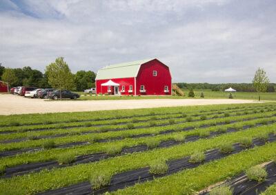 UABS Shop for Lavender Farm MI (3)1